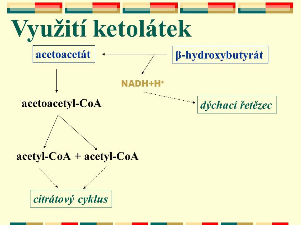 Využití ketolátek acetyl-CoA + acetyl-CoA acetoacetyl-CoA citrátový cyklus acetoacetát β-hydroxybutyrát NADH+H + dýchací řetězec