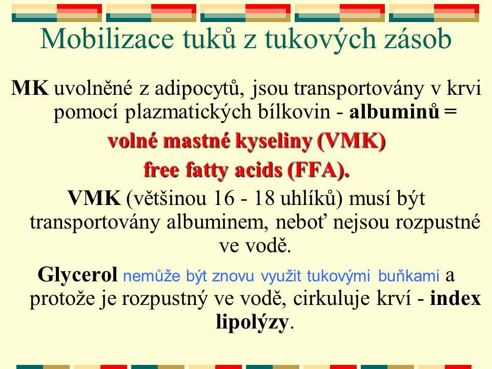 Mobilizace tuků z tukových zásob MK uvolněné z adipocytů, jsou transportovány v krvi pomocí plazmatických bílkovin - albuminů = volné mastné kyseliny