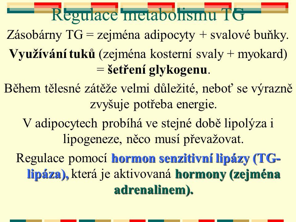 Regulace metabolismu TG Zásobárny TG = zejména adipocyty + svalové buňky. Využívání tuků (zejména kosterní svaly + myokard) = šetření glykogenu. Během