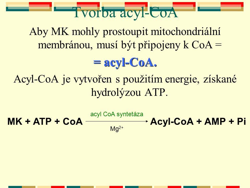 Tvorba acyl-CoA Aby MK mohly prostoupit mitochondriální membránou, musí být připojeny k CoA = = acyl-CoA. Acyl-CoA je vytvořen s použitím energie, zís