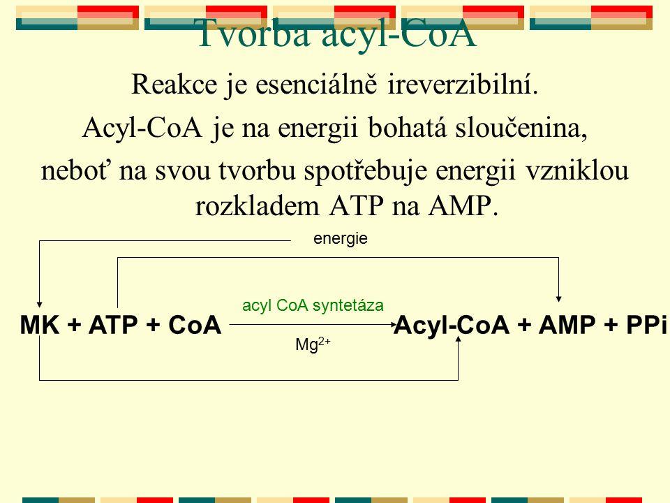 Tvorba acyl-CoA Reakce je esenciálně ireverzibilní. Acyl-CoA je na energii bohatá sloučenina, neboť na svou tvorbu spotřebuje energii vzniklou rozklad