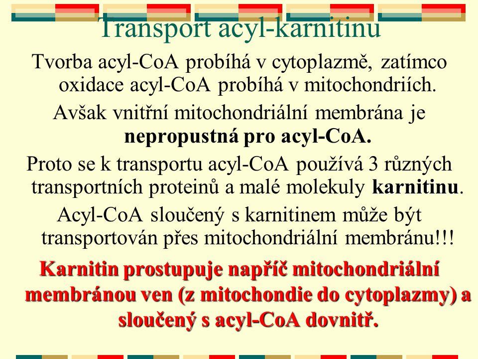 Transport acyl-karnitinu Tvorba acyl-CoA probíhá v cytoplazmě, zatímco oxidace acyl-CoA probíhá v mitochondriích. Avšak vnitřní mitochondriální membrá