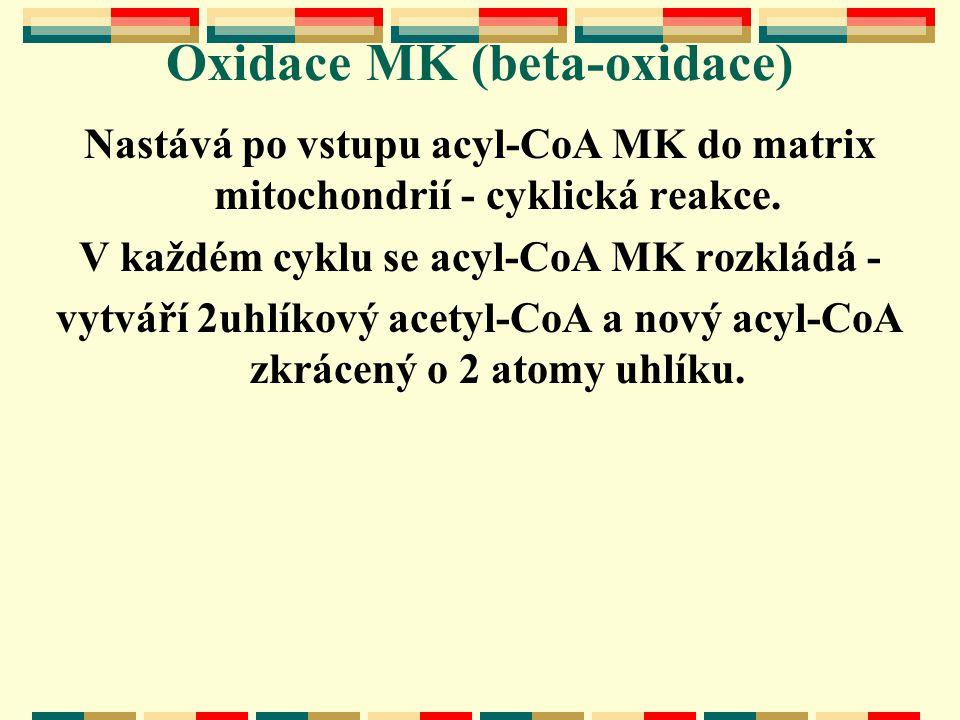 Oxidace MK (beta-oxidace) Nastává po vstupu acyl-CoA MK do matrix mitochondrií - cyklická reakce. V každém cyklu se acyl-CoA MK rozkládá - vytváří 2uh