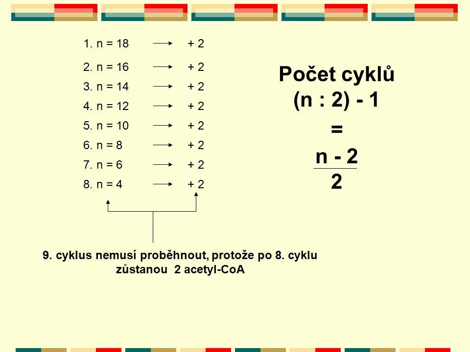 1. n = 18 2. n = 16 3. n = 14 4. n = 12 5. n = 10 6. n = 8 7. n = 6 8. n = 4 + 2 9. cyklus nemusí proběhnout, protože po 8. cyklu zůstanou 2 acetyl-Co