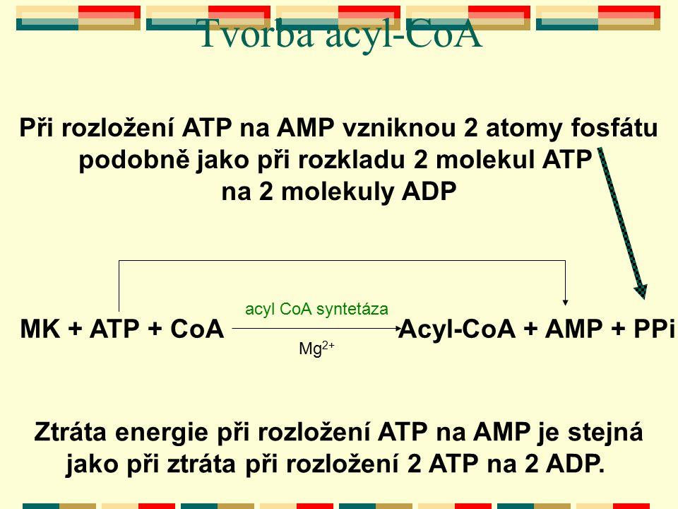 Tvorba acyl-CoA MK + ATP + CoAAcyl-CoA + AMP + PPi acyl CoA syntetáza Mg 2+ Při rozložení ATP na AMP vzniknou 2 atomy fosfátu podobně jako při rozklad