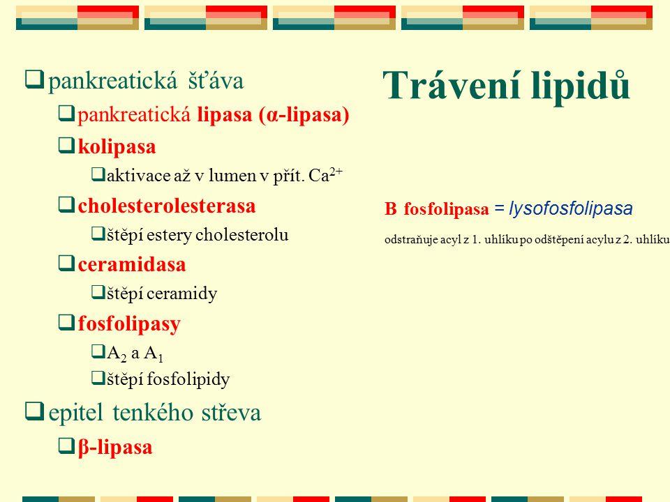 VLDL – lipoproteiny s velmi nízkou hustotou LDL – lipoproteiny s nízkou hustotou IDL – lipoproteiny se střední hustotou HDL – lipoproteiny s vysokou hustotou TAG – triacylglyceroly NEMK – neesterifikované mastné kyseliny FL – fosfolipidy CH – cholesterol ECH – estery cholesterolu A, B, C, E – typy proteinů (apolipoproteiny) v lipoproteinových částicích CETP– bílkoviny přenášející estery cholesterolu LPL – lipoproteinová lipasa LCAT – lecithin-cholesterolacyltransferasa Přehled zkratek použitých ve schématech