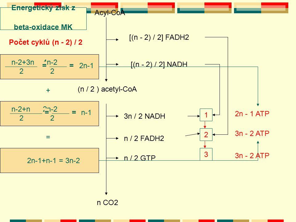 Acyl-CoA Počet cyklů (n - 2) / 2 [(n - 2) / 2] FADH2 [(n - 2) / 2] NADH (n / 2 ) acetyl-CoA 3n / 2 NADH n / 2 FADH2 n / 2 GTP 1 2 3 n CO2 n-2+3n 4n-2