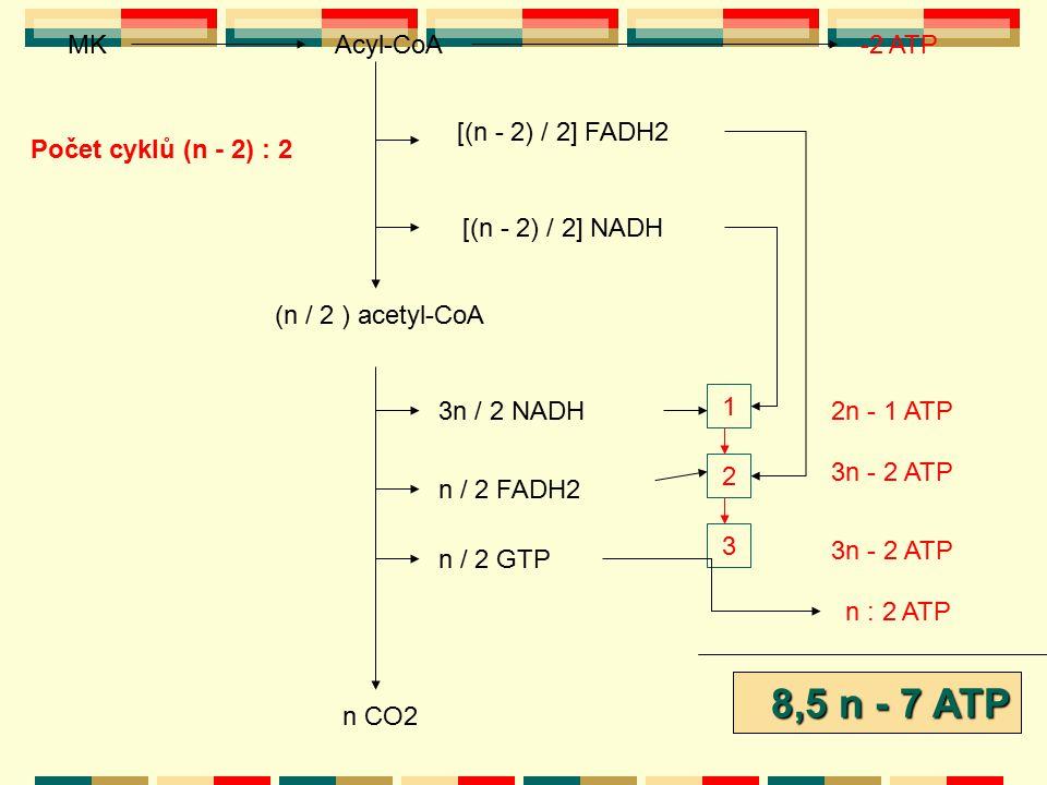 Acyl-CoA Počet cyklů (n - 2) : 2 [(n - 2) / 2] FADH2 [(n - 2) / 2] NADH (n / 2 ) acetyl-CoA 3n / 2 NADH n / 2 FADH2 n / 2 GTP 1 2 3 2n - 1 ATP 3n - 2
