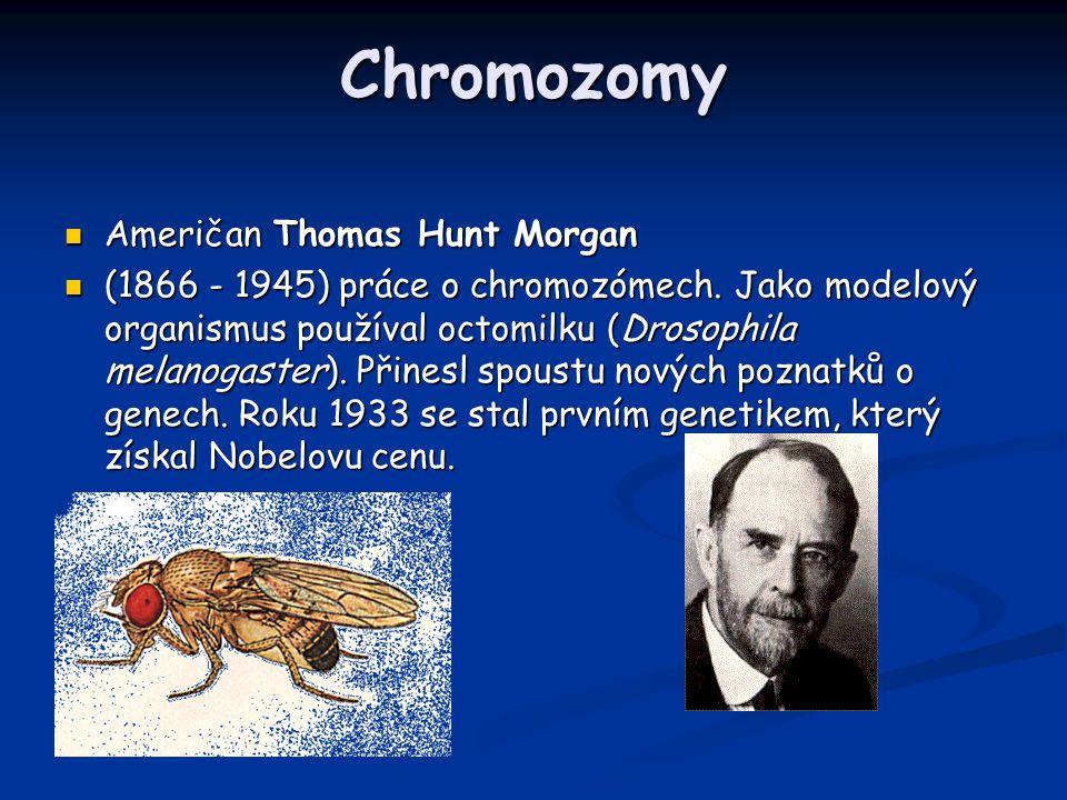 Chromozomy Američan Thomas Hunt Morgan Američan Thomas Hunt Morgan (1866 - 1945) práce o chromozómech. Jako modelový organismus používal octomilku (Dr