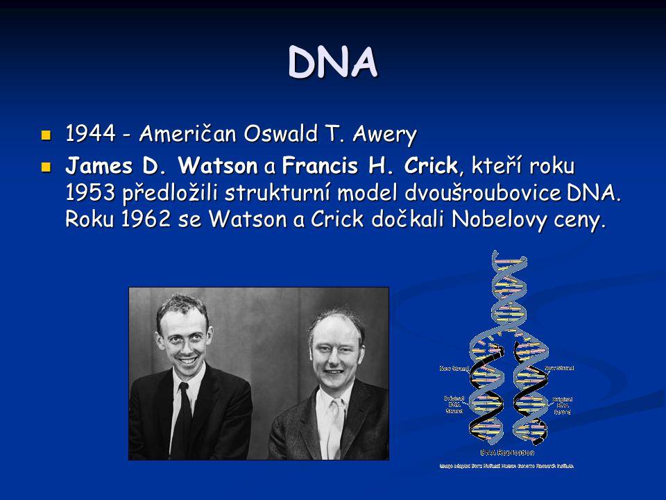 DNA 1944 - Američan Oswald T. Awery 1944 - Američan Oswald T. Awery James D. Watson a Francis H. Crick, kteří roku 1953 předložili strukturní model dv