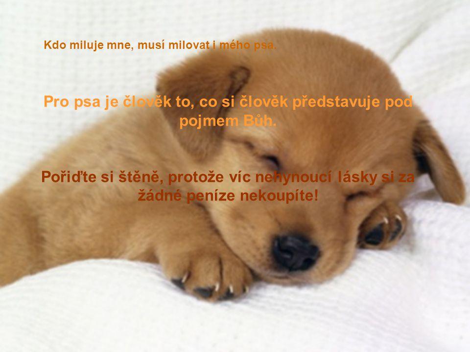 Pro psa je člověk to, co si člověk představuje pod pojmem Bůh. Pořiďte si štěně, protože víc nehynoucí lásky si za žádné peníze nekoupíte! Kdo miluje