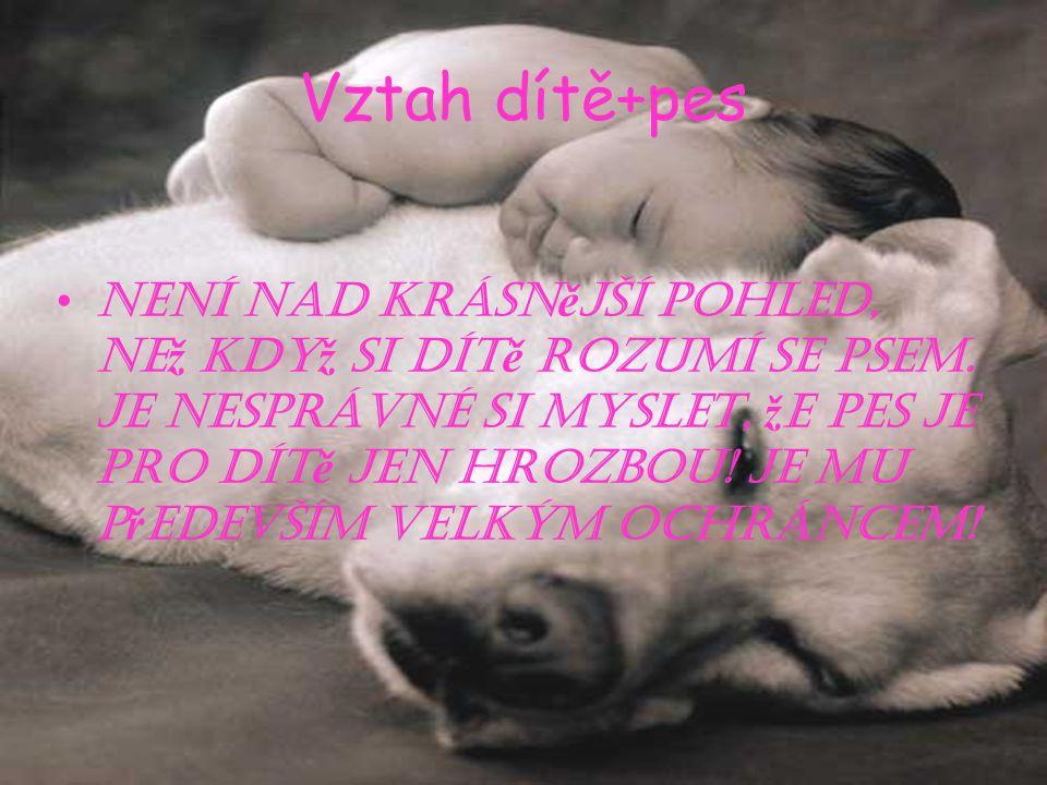 Vztah dítě+pes Není nad krásn ě jší pohled, ne ž kdy ž si dít ě rozumí se psem.