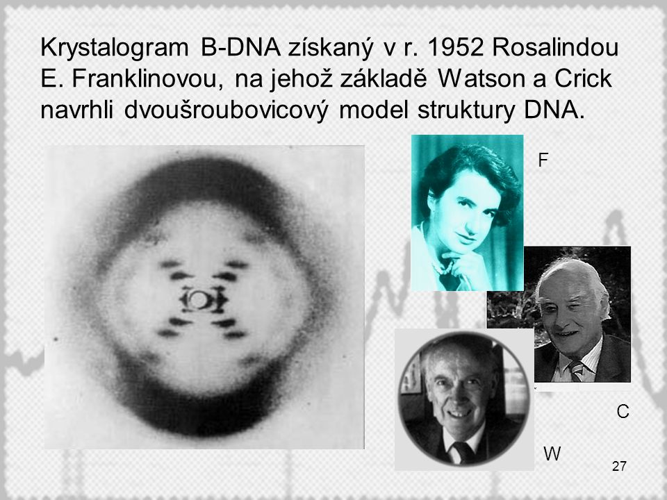 27 Krystalogram B-DNA získaný v r. 1952 Rosalindou E. Franklinovou, na jehož základě Watson a Crick navrhli dvoušroubovicový model struktury DNA. F W