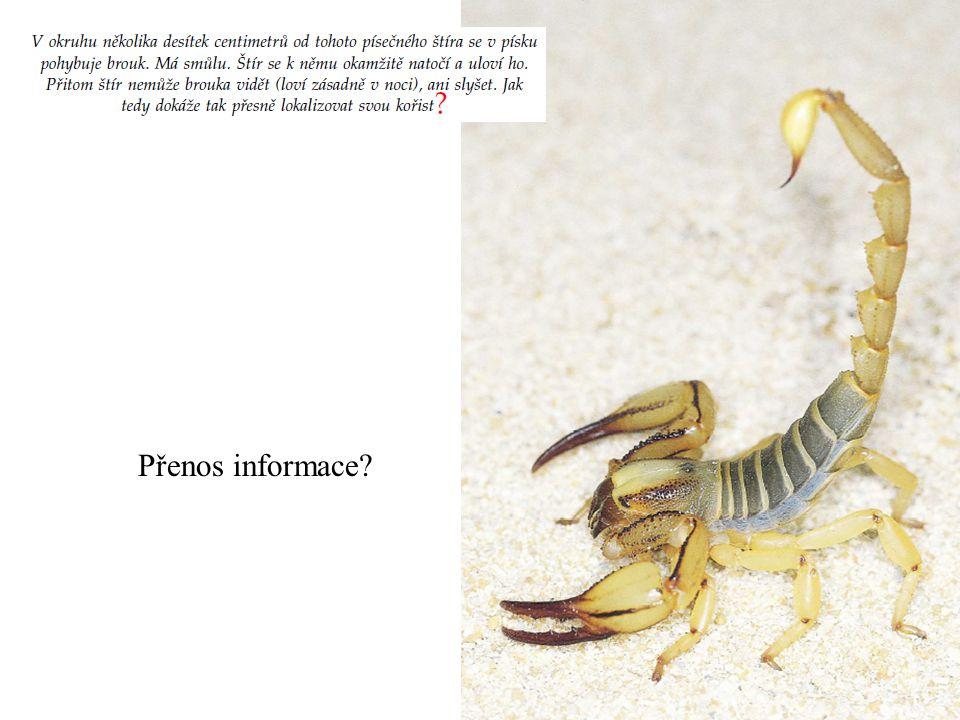 Přenos informace?