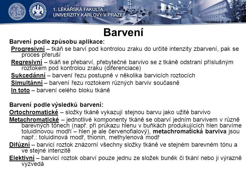 Hrot jazyka Dřeň ledviny Weigert van Gieson Foto: doc.