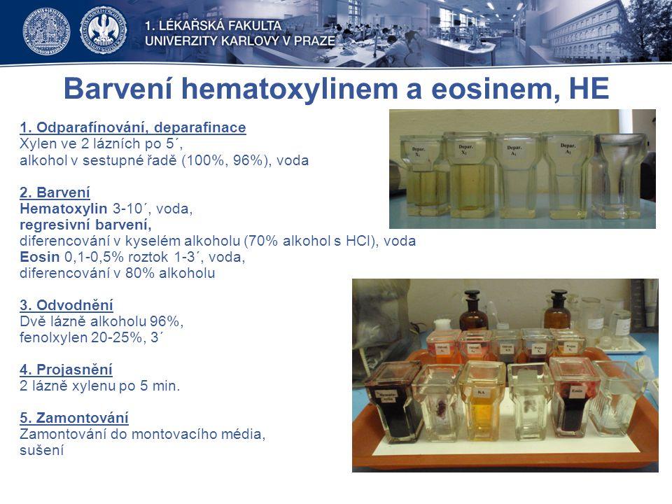 Barvení hematoxylinem a eosinem, HE 1. Odparafínování, deparafinace Xylen ve 2 lázních po 5´, alkohol v sestupné řadě (100%, 96%), voda 2. Barvení Hem