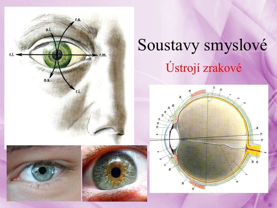 nejdůležitější smysl člověka – 80-90% informací viditelná vlnová délka 400-700 nm – Světlo, barvy, velikosti, tvar, vzdálenost Orgánem zraku je oko – složeno s oční koule + přídatných orgánů Přídatné orgány: – okohybné svaly, víčka, spojivka, slzní ústrojí 3Smyslové soustavy - oko
