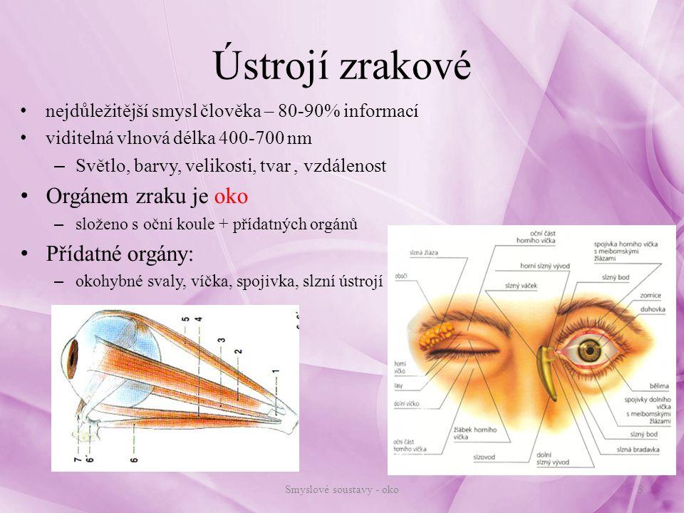 Anatomie zrakového orgánu Oční koule: – uložena v obličejové části lebky – kulovitý tvar – v hrotu očnice: Zrakový nerv, cévní zásobení Oko chráněno: – víčka, řasy, obočí...