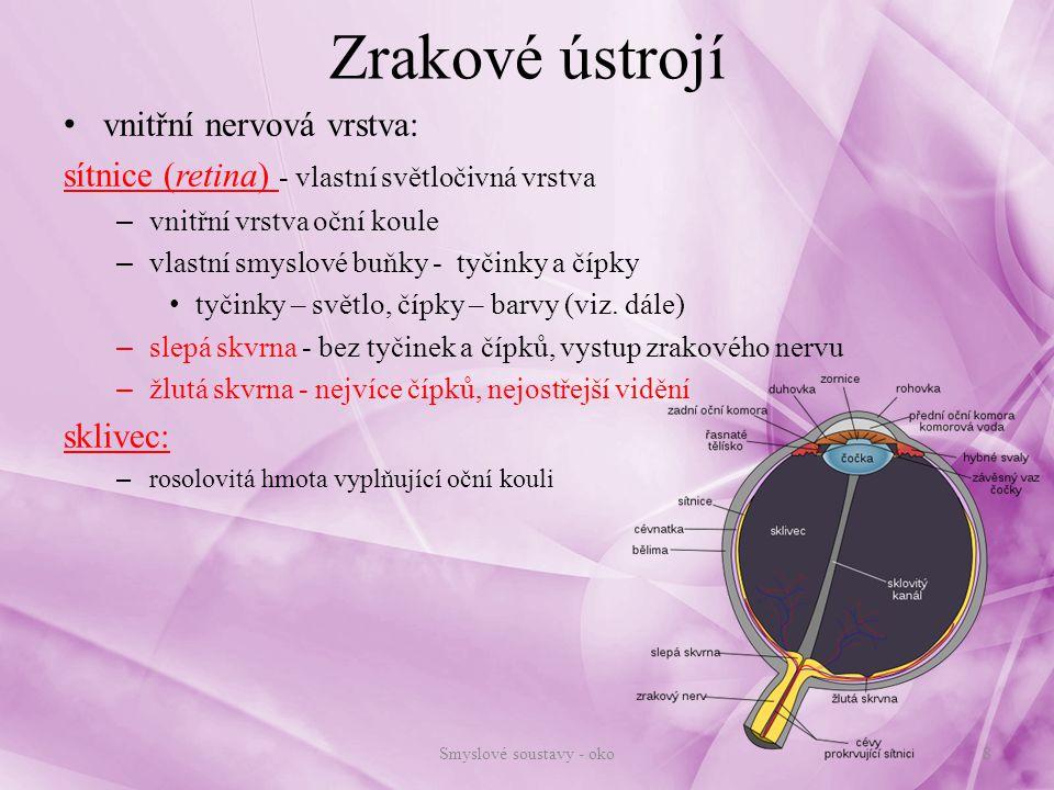 Zrakové ústrojí vnitřní nervová vrstva: sítnice (retina) - vlastní světločivná vrstva – vnitřní vrstva oční koule – vlastní smyslové buňky - tyčinky a