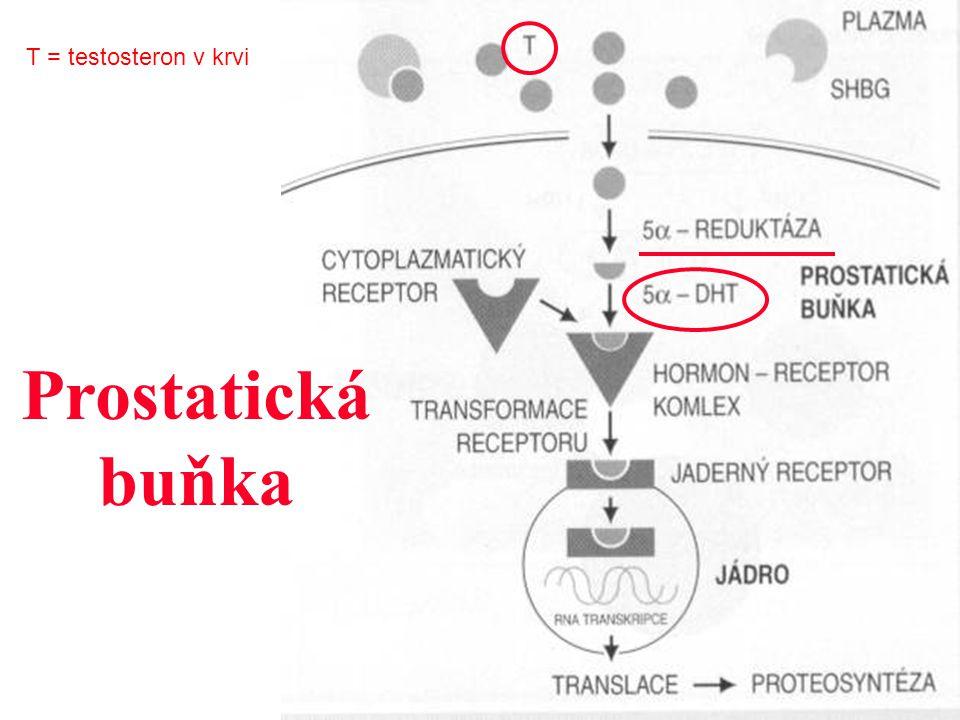 Prostatická buňka T = testosteron v krvi