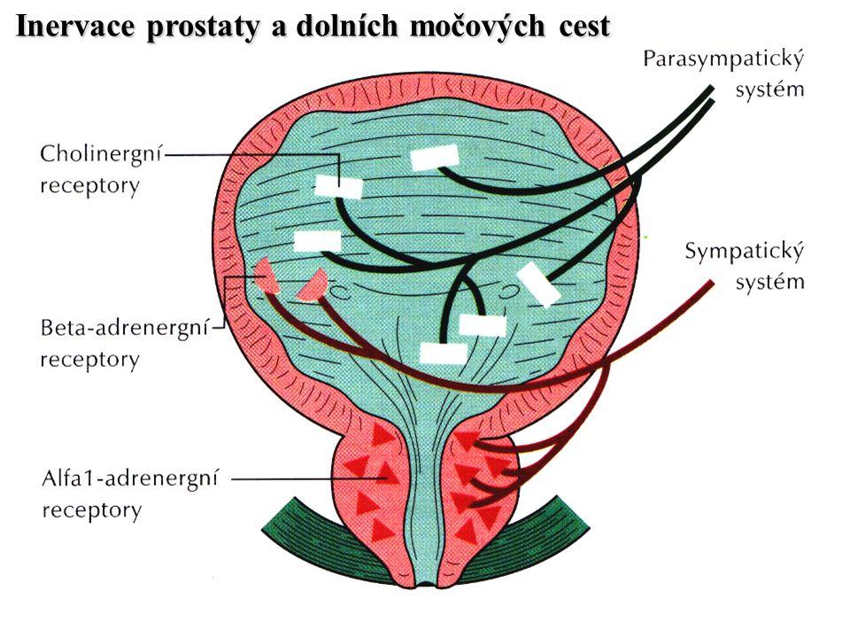 Inervace prostaty a dolních močových cest