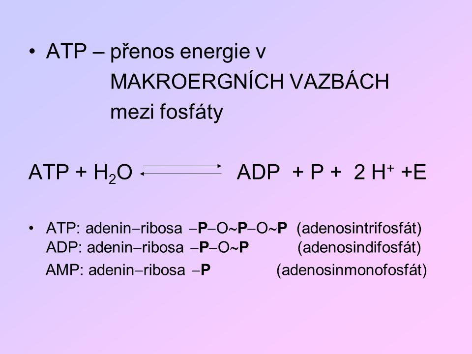 ATP – přenos energie v MAKROERGNÍCH VAZBÁCH mezi fosfáty ATP + H 2 O ADP + P + 2 H + +E ATP: adenin  ribosa  P  O  P  O  P (adenosintrifosfát) A