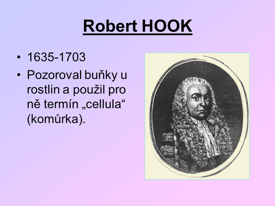 """Robert HOOK 1635-1703 Pozoroval buňky u rostlin a použil pro ně termín """"cellula"""" (komůrka)."""