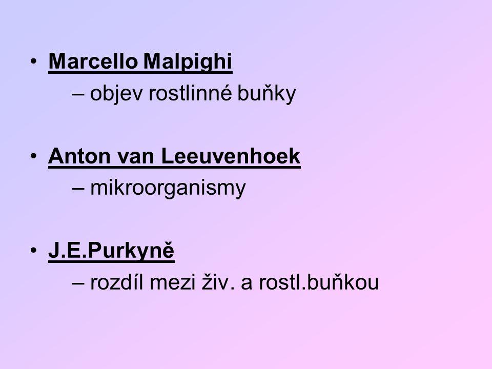 Marcello Malpighi – objev rostlinné buňky Anton van Leeuvenhoek – mikroorganismy J.E.Purkyně – rozdíl mezi živ. a rostl.buňkou