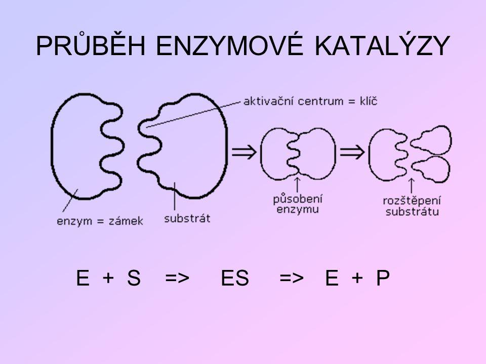 PRŮBĚH ENZYMOVÉ KATALÝZY E + S => ES => E + P