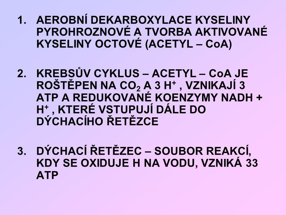 1.AEROBNÍ DEKARBOXYLACE KYSELINY PYROHROZNOVÉ A TVORBA AKTIVOVANÉ KYSELINY OCTOVÉ (ACETYL – CoA) 2.KREBSŮV CYKLUS – ACETYL – CoA JE ROŠTĚPEN NA CO 2 A