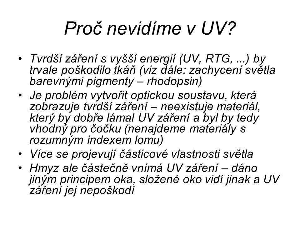 Proč nevidíme v UV? Tvrdší záření s vyšší energií (UV, RTG,...) by trvale poškodilo tkáň (viz dále: zachycení světla barevnými pigmenty – rhodopsin) J