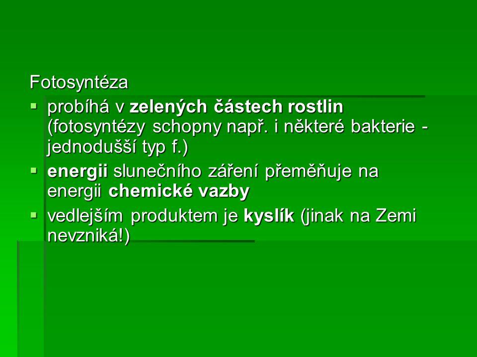 Fotosyntéza  probíhá v zelených částech rostlin (fotosyntézy schopny např.