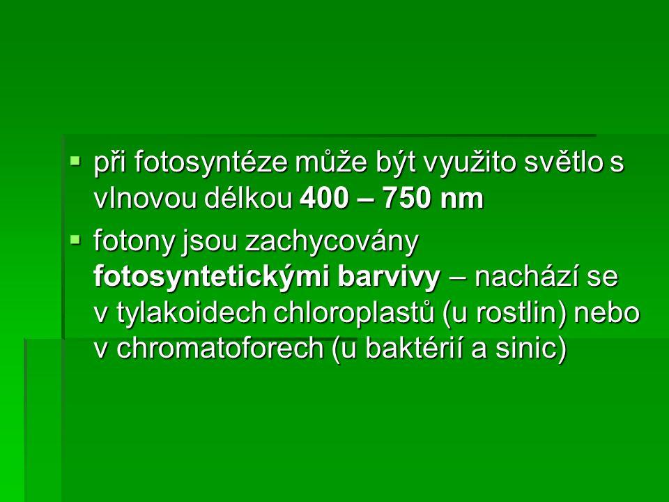  při fotosyntéze může být využito světlo s vlnovou délkou 400 – 750 nm  fotony jsou zachycovány fotosyntetickými barvivy – nachází se v tylakoidech chloroplastů (u rostlin) nebo v chromatoforech (u baktérií a sinic)