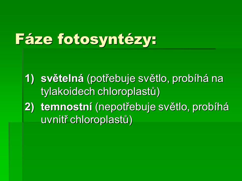 Fáze fotosyntézy: 1)světelná (potřebuje světlo, probíhá na tylakoidech chloroplastů) 2)temnostní (nepotřebuje světlo, probíhá uvnitř chloroplastů)