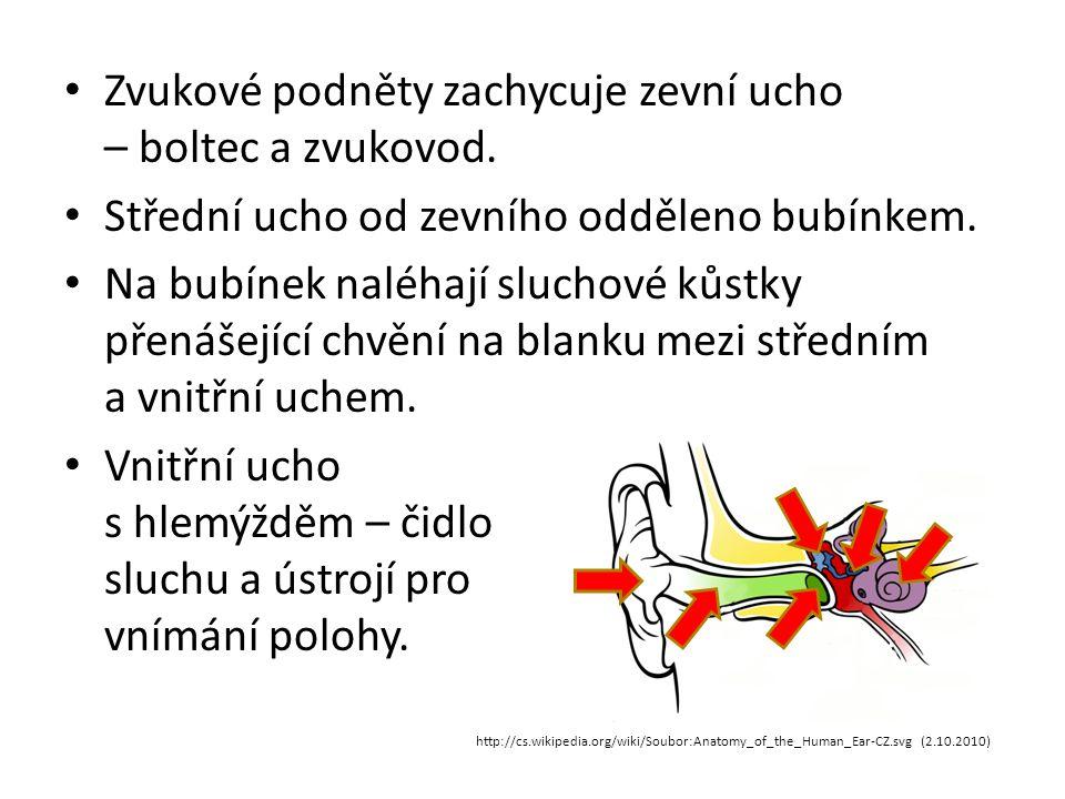 Zvukové podněty zachycuje zevní ucho – boltec a zvukovod. Střední ucho od zevního odděleno bubínkem. Na bubínek naléhají sluchové kůstky přenášející c
