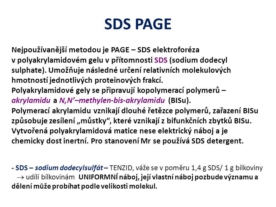 SDS PAGE Nejpoužívanější metodou je PAGE – SDS elektroforéza v polyakrylamidovém gelu v přítomnosti SDS (sodium dodecyl sulphate). Umožňuje následné u