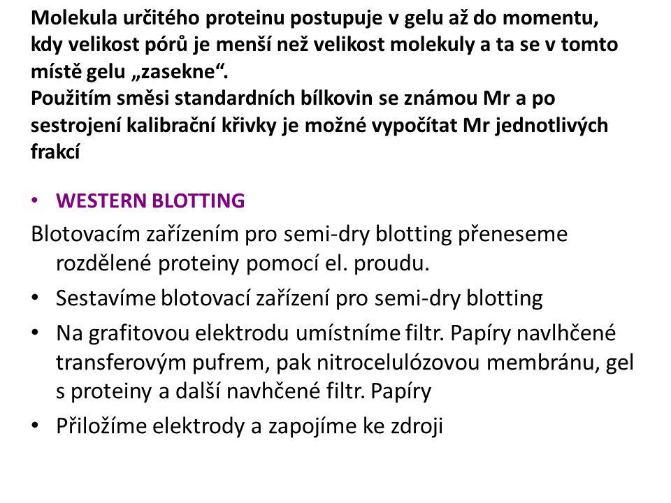WESTERN BLOTTING Blotovacím zařízením pro semi-dry blotting přeneseme rozdělené proteiny pomocí el.