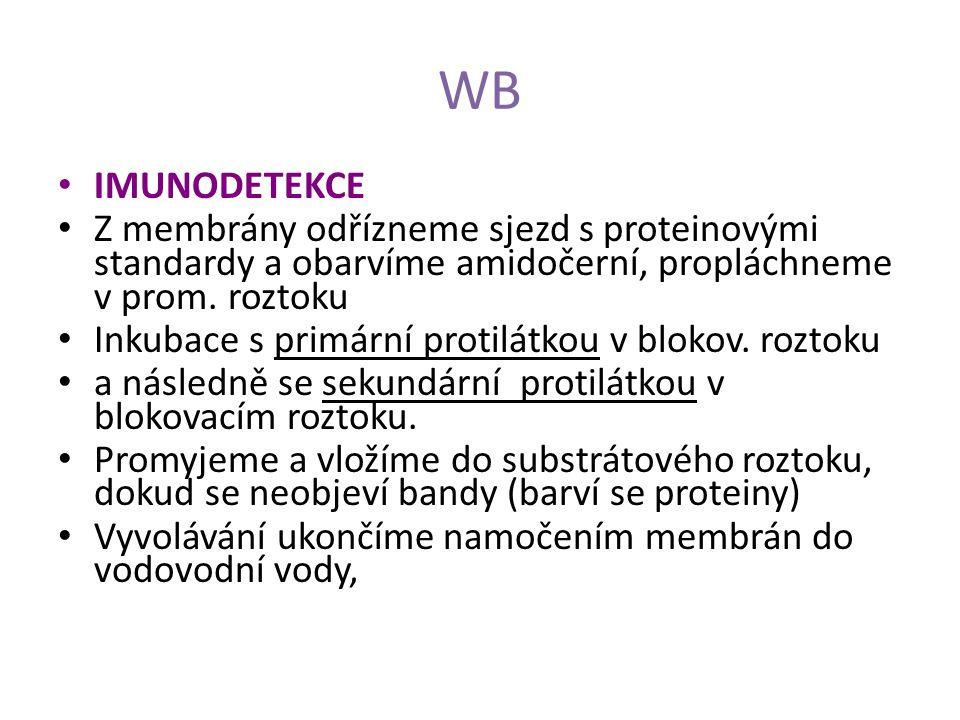 WB IMUNODETEKCE Z membrány odřízneme sjezd s proteinovými standardy a obarvíme amidočerní, propláchneme v prom. roztoku Inkubace s primární protilátko
