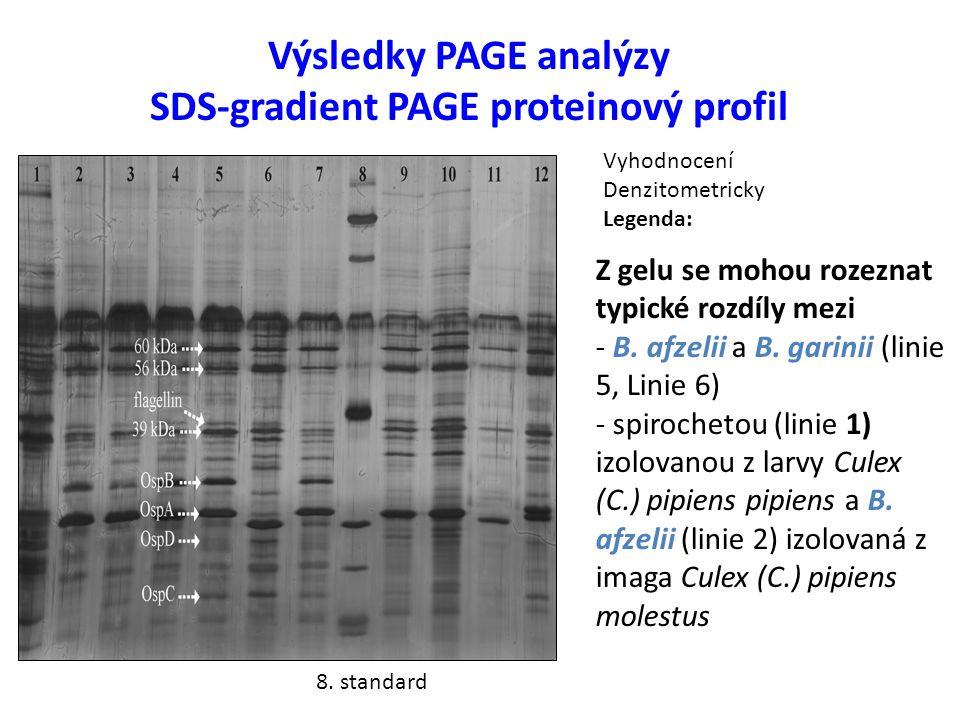 Výsledky PAGE analýzy SDS-gradient PAGE proteinový profil Z gelu se mohou rozeznat typické rozdíly mezi - B.