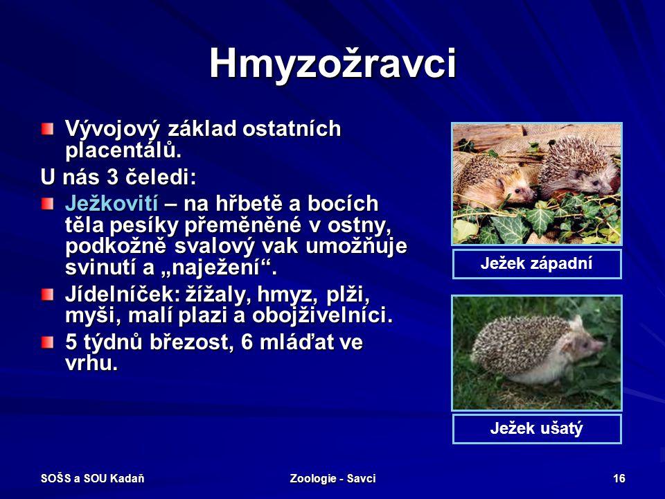 SOŠS a SOU Kadaň Zoologie - Savci 16 Hmyzožravci Vývojový základ ostatních placentálů. U nás 3 čeledi: Ježkovití – na hřbetě a bocích těla pesíky přem