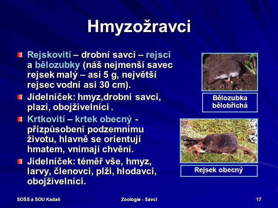 SOŠS a SOU Kadaň Zoologie - Savci 17 Hmyzožravci Rejskovití – drobní savci – rejsci a bělozubky (náš nejmenší savec rejsek malý – asi 5 g, největší re