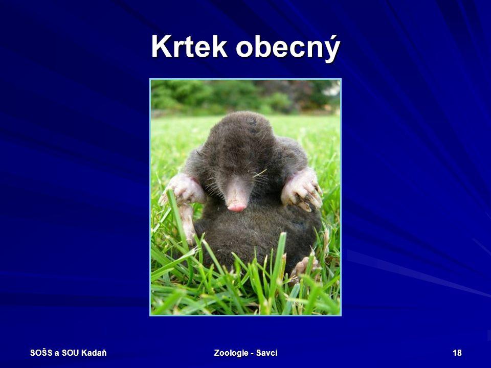 SOŠS a SOU Kadaň Zoologie - Savci 18 Krtek obecný