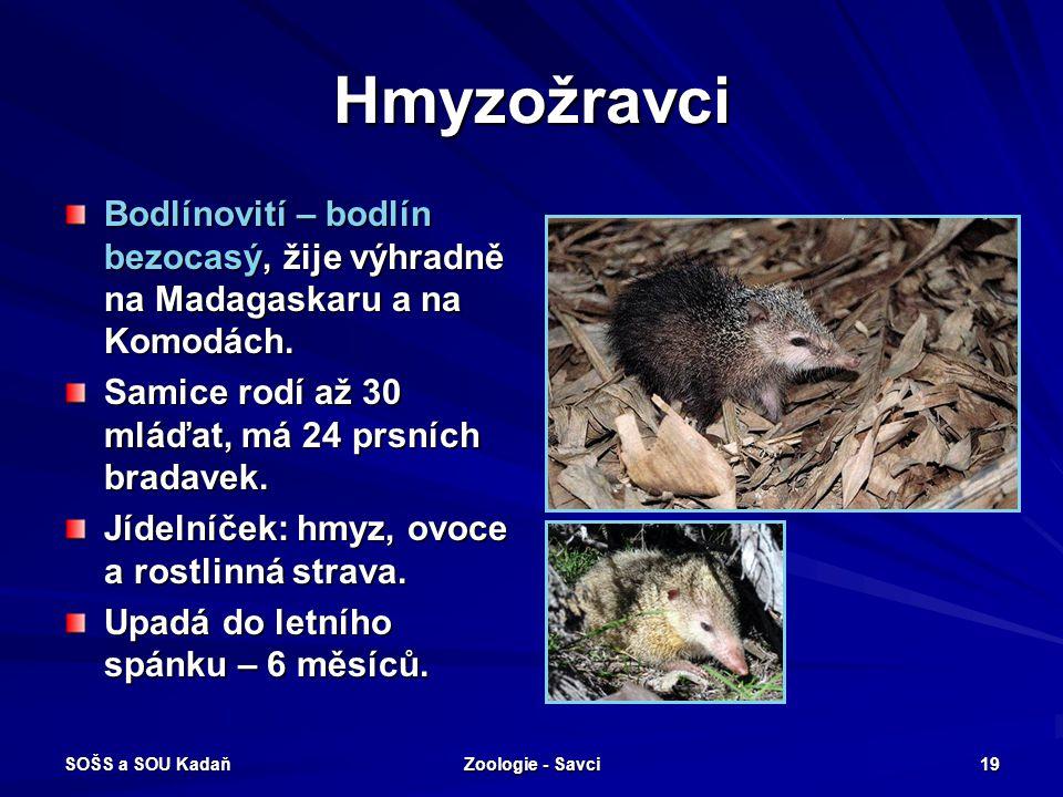 SOŠS a SOU Kadaň Zoologie - Savci 19 Hmyzožravci Bodlínovití – bodlín bezocasý, žije výhradně na Madagaskaru a na Komodách. Samice rodí až 30 mláďat,