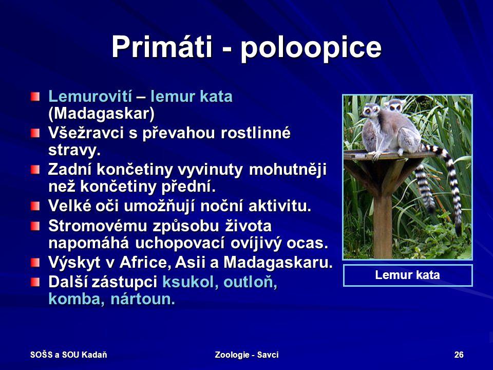 SOŠS a SOU Kadaň Zoologie - Savci 26 Primáti - poloopice Lemurovití – lemur kata (Madagaskar) Všežravci s převahou rostlinné stravy. Zadní končetiny v