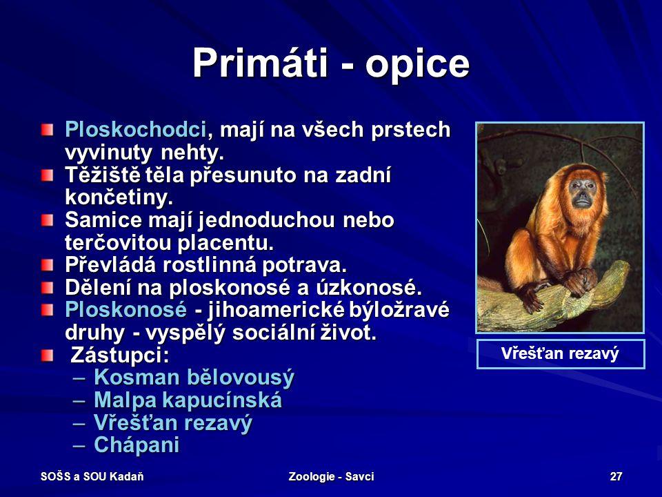SOŠS a SOU Kadaň Zoologie - Savci 27 Primáti - opice Ploskochodci, mají na všech prstech vyvinuty nehty. Těžiště těla přesunuto na zadní končetiny. Sa