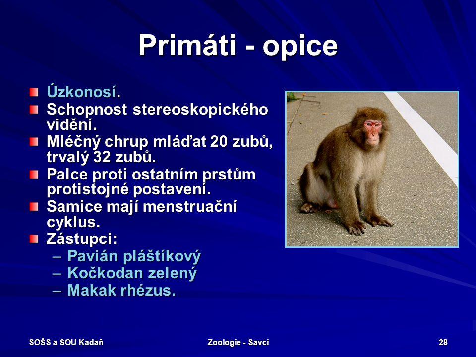 SOŠS a SOU Kadaň Zoologie - Savci 28 Primáti - opice Úzkonosí. Schopnost stereoskopického vidění. Mléčný chrup mláďat 20 zubů, trvalý 32 zubů. Palce p