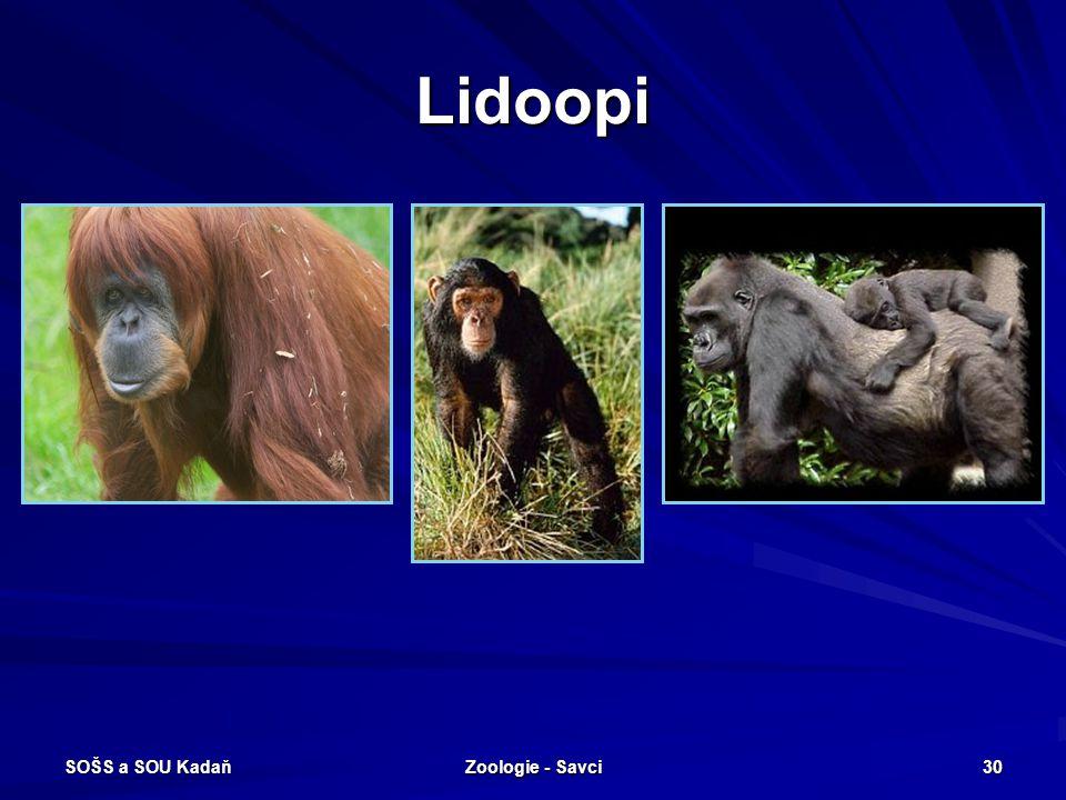 SOŠS a SOU Kadaň Zoologie - Savci 30 Lidoopi