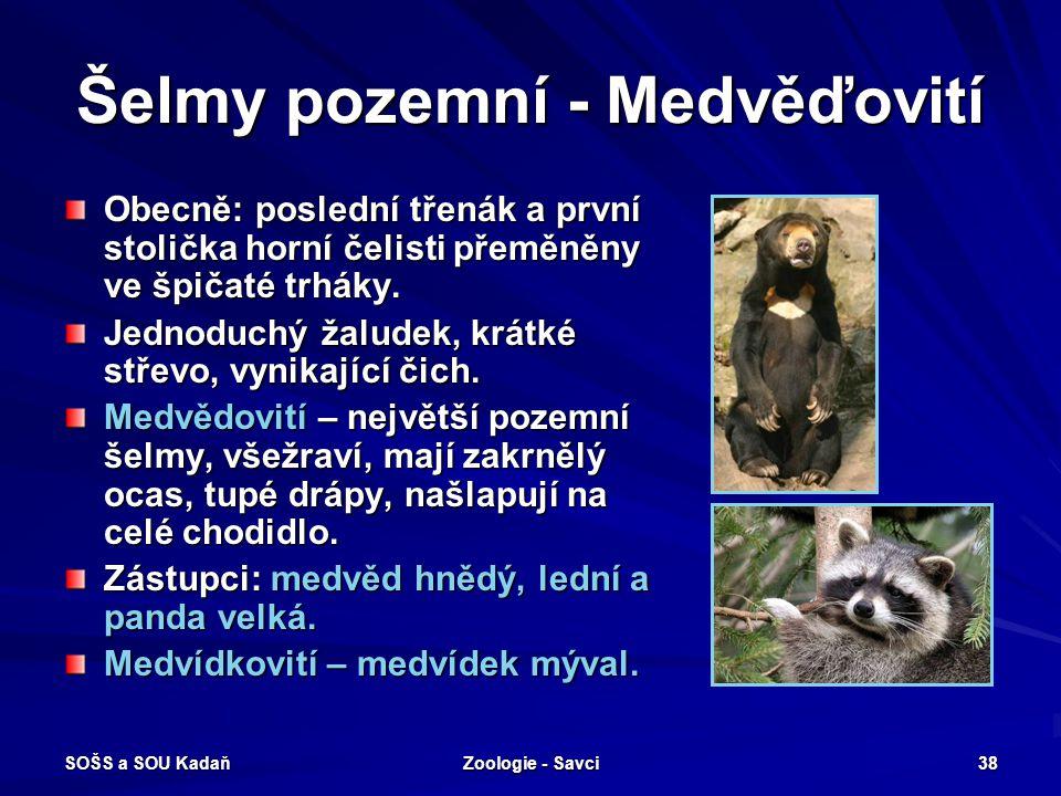 SOŠS a SOU Kadaň Zoologie - Savci 38 Šelmy pozemní - Medvěďovití Obecně: poslední třenák a první stolička horní čelisti přeměněny ve špičaté trháky. J