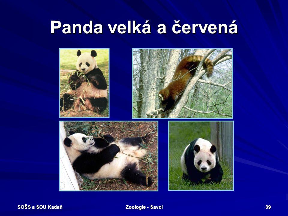 SOŠS a SOU Kadaň Zoologie - Savci 39 Panda velká a červená