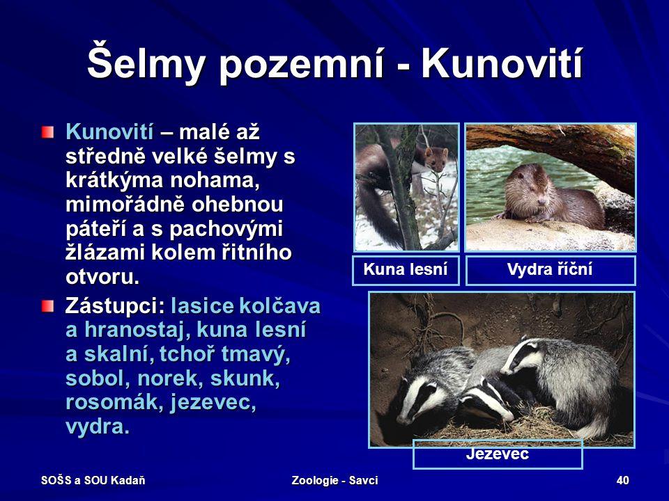 SOŠS a SOU Kadaň Zoologie - Savci 40 Šelmy pozemní - Kunovití Kunovití – malé až středně velké šelmy s krátkýma nohama, mimořádně ohebnou páteří a s p